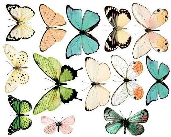 diagramă opțiune fluture la 50 de ani cum să faci bani